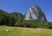Austria, Upper Austria, Salzkammergut, Mondseeland, View of Drachenwand, flock of sheep - WWF04072