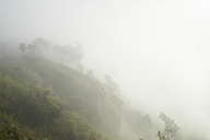 Thailand, Phu Chi Fa, foggy mystic view of the forest in the mountains - IGGF00336