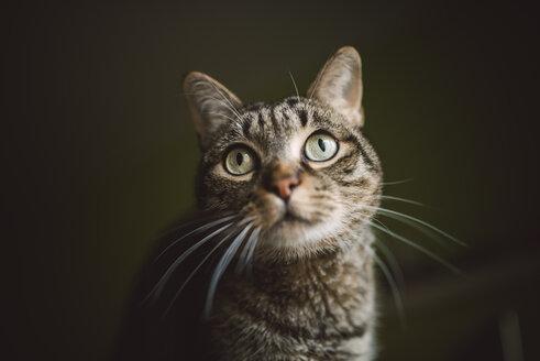 Portrait of tabby cat watching something - RAEF01966