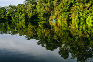 Costa Rica, Tortuguero, Landscape with reflection in the mangroves of Tortuguero - KIJF01879