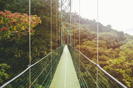 Costa Rica, Monte Verde, Suspension bridge in the forest of Monte Verde - KIJF01882