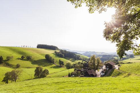 Germany, Baden-Wurttemberg, Black Forest, Black forest farm near St. Maergen - WDF04255