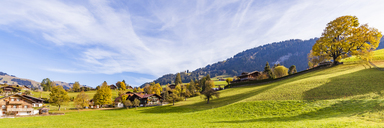 Switzerland, Canton of Bern, Gstaad, alpine meadow and farmhouses - WDF04298
