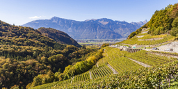 Switzerland, Canton Vaud, Aigle, vineyard - WDF04301