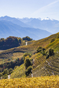 Switzerland, Valais, Montagnon, vineyards - WDF04304