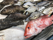 Fish market sales display with Red Snapper, Sea Bass and other kinds of fish - ABAF02193