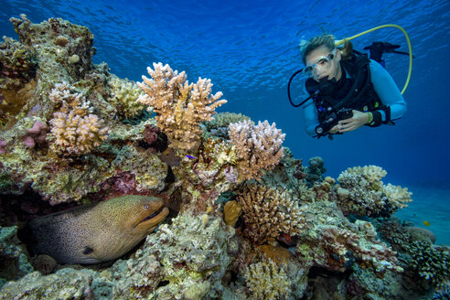 Egypt, Red Sea, Hurghada, scuba diver and yellow-edged moray - YRF00172