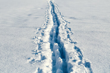 Tracks in snow - WVF00898