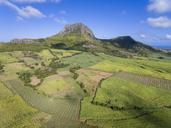 Mauritius, Highlands, sugarcane fields - FOF09696