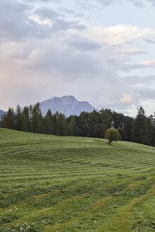Austria, Tyrol, Mieming Plateau, mowed meadow after sunset - CVF00061