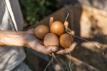 Hand holding chicken eggs - TCF05452