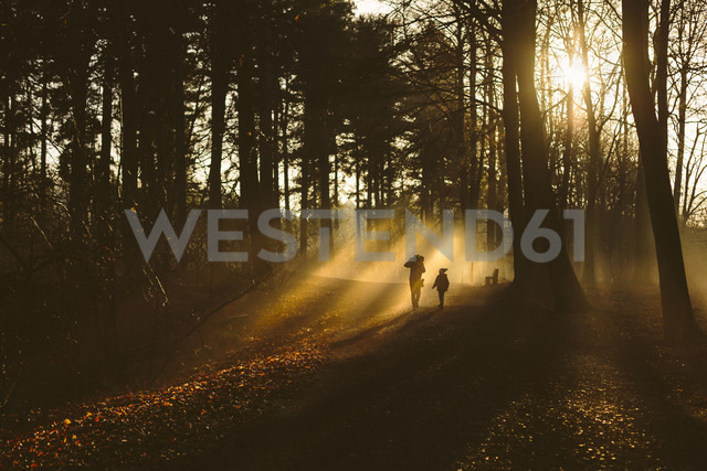 Father and son walking in forest in backlight - NMS00190