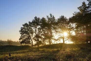 Germany, Bavaria, Lower Bavaria, Altmuehl Valley, Pines at sunrise - SIEF07686