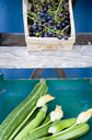 Ladder, basket with blue grapes, box with zucchini and blossoms - GISF00291