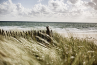 France, Normandy, Portbail, Contentin, wooden fence at beach dune - JATF01018