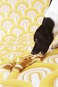Dog eating Stutenkerl - FSF00980