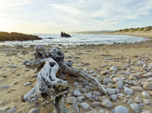 South Africa, Western Cape, Knysna, Buffalo Bay, deadwood at beach - CVF00072