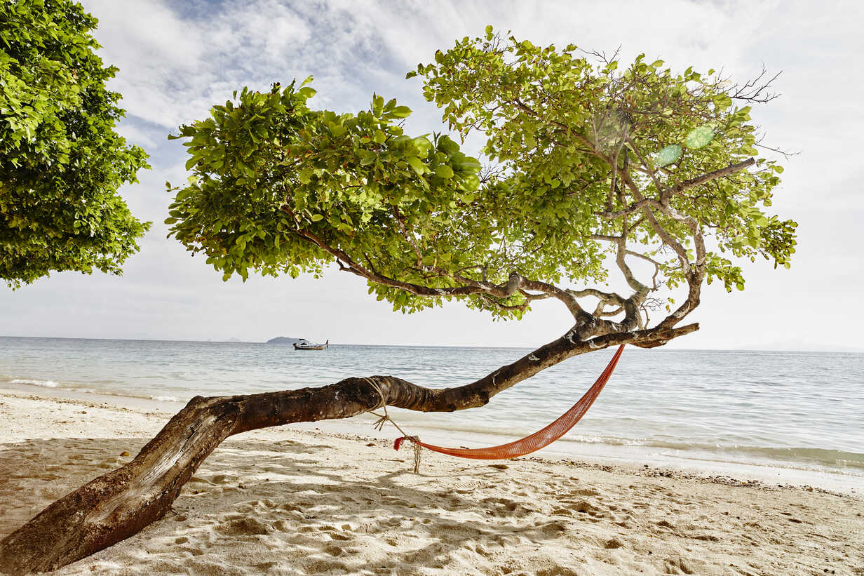 Thailand, Phi Phi Islands, Ko Phi Phi, hammock in a tree on the beach - RORF01113 - Roger Richter/Westend61