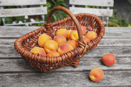 Wickerbasket of apricots on garden table - GWF05399