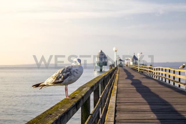 Germany, Groemitz, seagull on railing of sea bridge - PUF01163