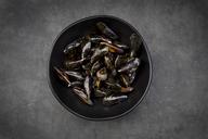 Organic raw blue mussels - LVF06615