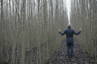 Businessman standing amidst willows - PSTF00066