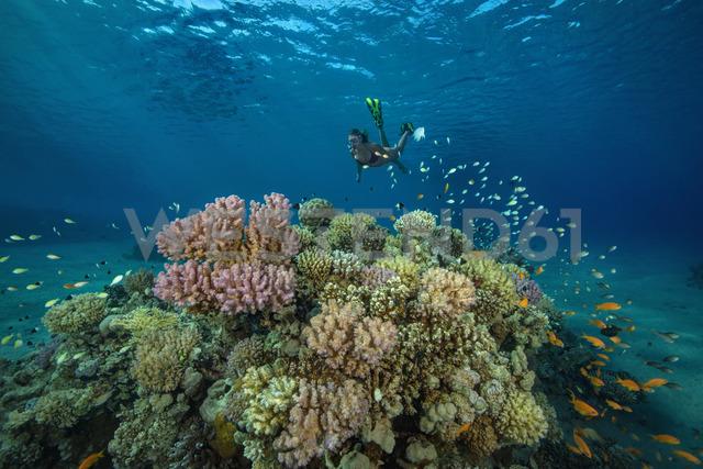 Egypt, Red Sea, Hurghada, teenage girl snorkeling at coral reef - YRF00189