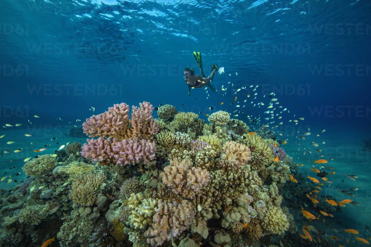Egypt, Red Sea, Hurghada, teenage girl snorkeling at coral reef - YRF00189 - Herbert Meyrl/Westend61