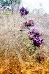 grass and purple flowers - NGF00446
