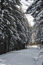 Bulgaria, road in winter forest? - BZF00381