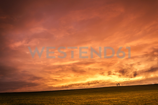 Austria, Upper Austria, walker on meadow at sunset - WVF00919