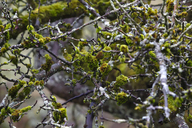 Germany, branches, moss-grown in winter - JTF00898