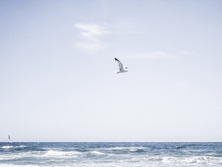 Italy, Liguria, Imperia, sea, flying seagull - NEKF00009