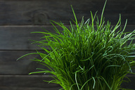 Chives - CSF28840