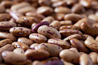 Pinto Beans, close-up - CSF28855