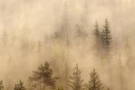 German, Bavaria, Munich, Isar Valley, Morning mist in forest - RUEF01797