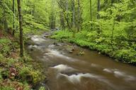 Germany, Saxony-Anhalt, Schierke, Harz, Bode river in the Elendstal valley - RUEF01803