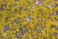 Italy, Sardinia, Lichen on granite rock - RUEF01818
