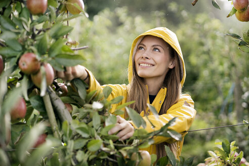 Smiling woman harvesting apples from tree - PESF00954