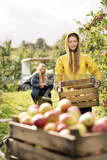 Two women harvesting apples in orchard - PESF00963 - Peter Scholl/Westend61