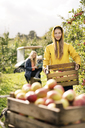 Two women harvesting apples in orchard - PESF00963
