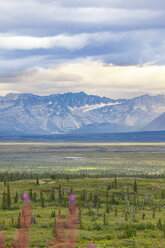USA, Alaska, landscape at Denali Highway - MMAF00270