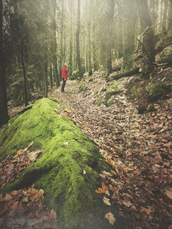 Germany, Rhineland Palatinate, Palatinate Forest, man standing on trail in mystic mossy forest - GWF05428