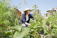 Smiling young woman wearing straw hat urban gardening - PDF01432