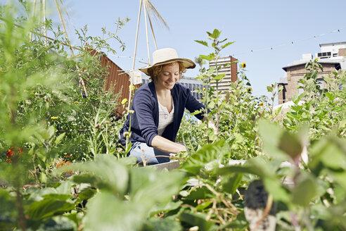 Smiling young woman wearing straw hat urban gardening - PDF01432