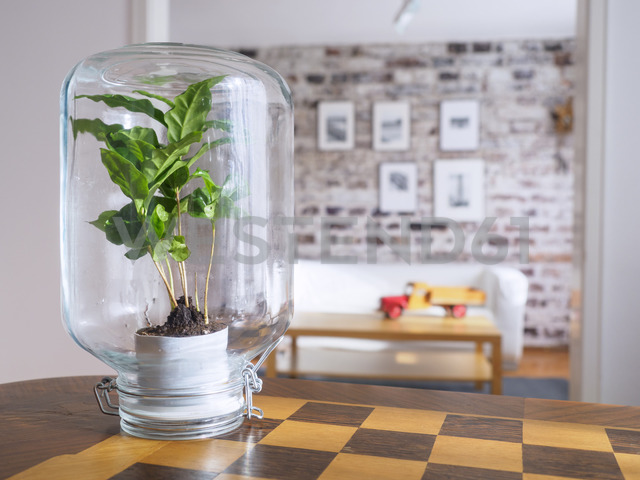 Microclimate, coffee plant under glass, water, recycled, biotope in glass - LAF01963