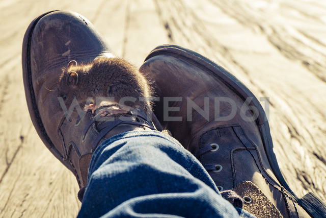 Mouse on shoe of a man sitting on ground - SEEF00036