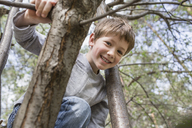 A young cheerful boy climbing a tree - FSIF00689