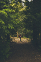 Rear view of person walking on footpath in forest - FSIF00971