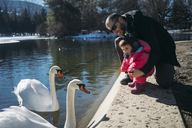 France, Osseja lake, cute baby with father watching the swans in a park - GEMF01882